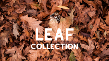 Leaf Collection (2)